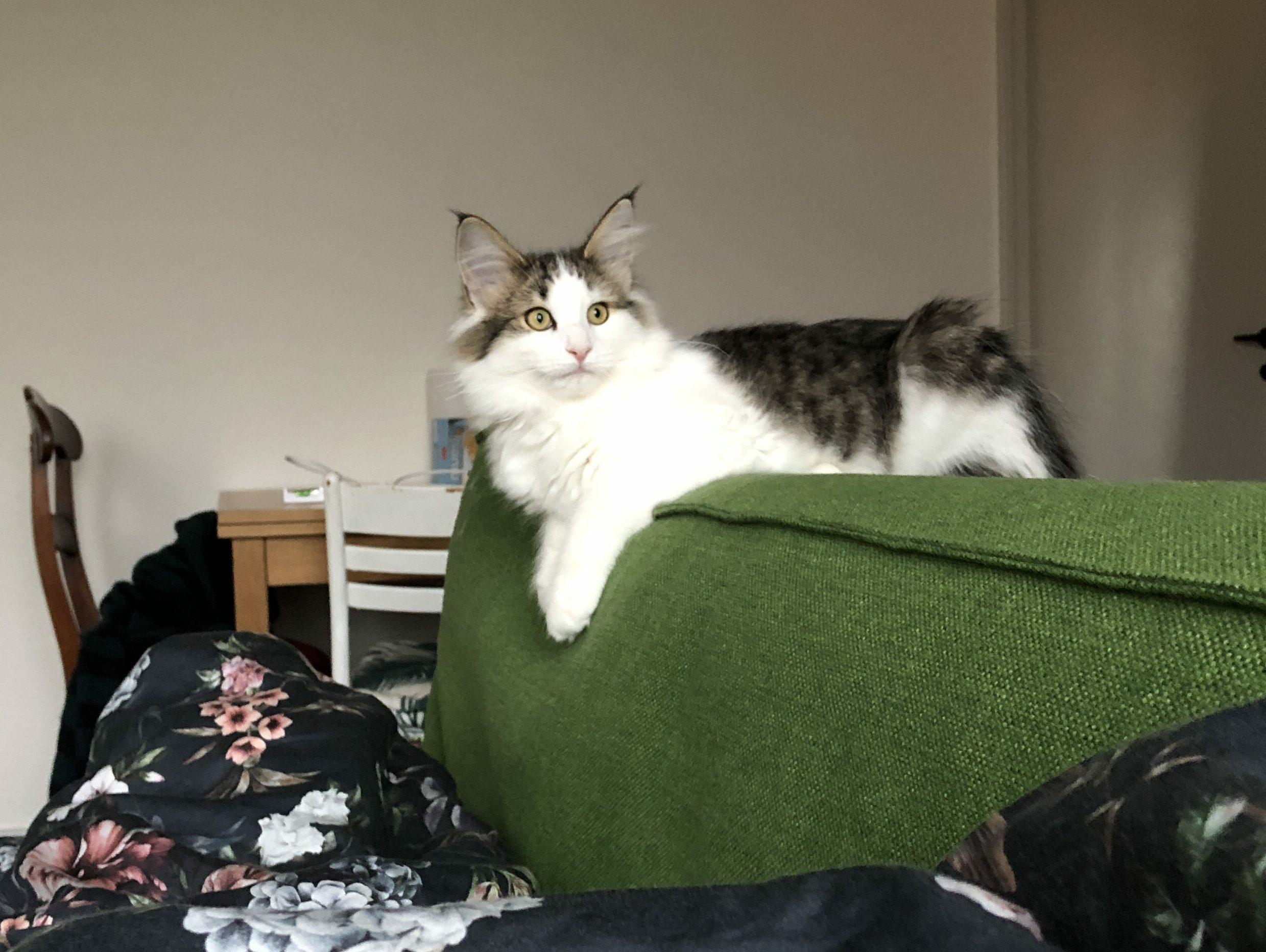 Min fantastiske kat Hugo